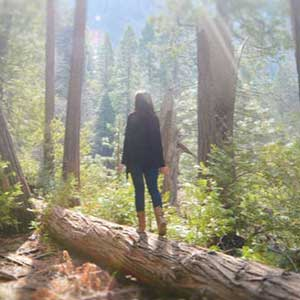 A woman on a log in a forest with the sun shining through showing how a trauma therapist can help you find healing from PTSD symptoms and find hope to move forward. Our Chicago therapists can help you in person or through video counseling anywhere in Illinois.